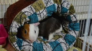 How To Make A Bed For Your Pet ||diy- Guinea Pig's Bed||