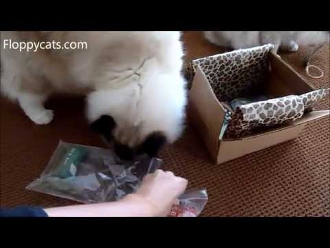 Ragdoll Cats Receive Care Package from The Cat Connection in Dallas - ねこ - ラグドール - Floppycats