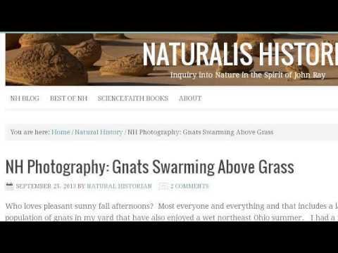Swarming Gnats In My Yard - YouTube