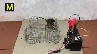 топ-10 ловушек для электрических мышей 2019