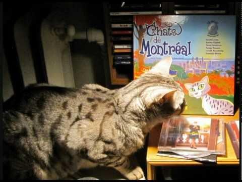 Chats de Montréal (Denis Truchi - Gérard Beauchamp)