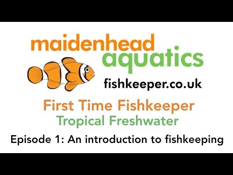 First Time Fishkeeper Episode 1: An Introduction To Fish Keeping