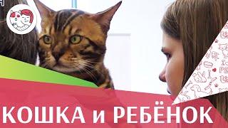 Подготовление кошки к появлению ребенка в доме: советы на ilikepet