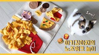 아기강아지 장난감 :: 시고르자브종 쪼코의 첫 노즈워크…