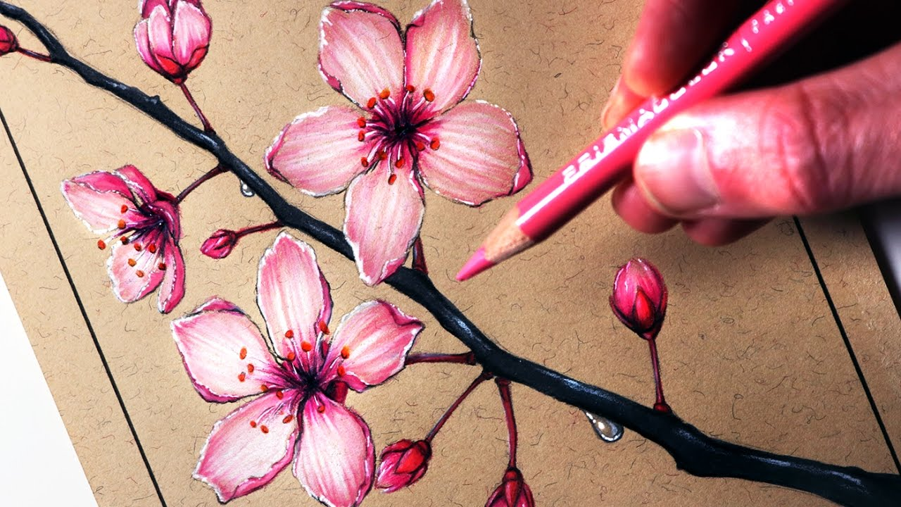 how to draw cherry blossoms youtube