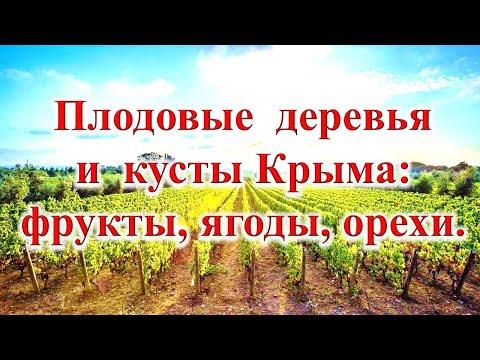 Вопрос: Какие экзотические фрукты можно вырастить в Крыму на своем участке?