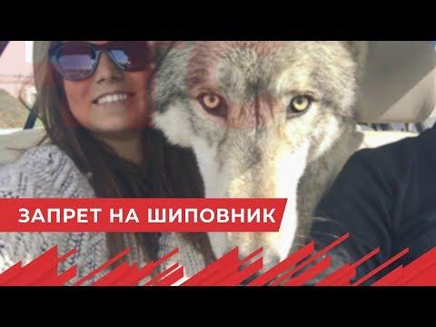 Финляндия запретила шиповник и волкособов