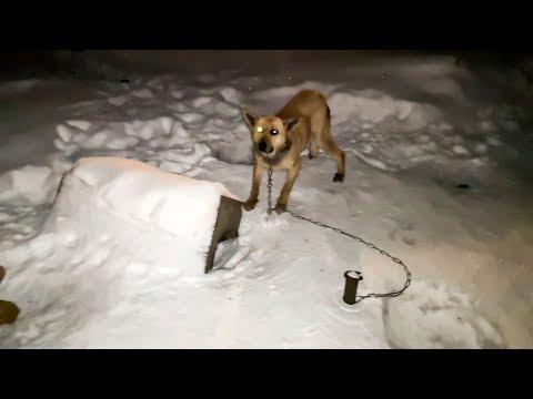 Жалко собаку До