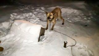 Жалко собаку До слез Забрали у прежнего хозяина Вы поймете почему the owner mocked the dog