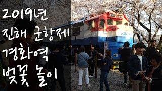 2019 진해 군항제 경화역 벚꽃놀이