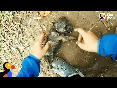 download Man Gives Drowning Puppy CPR | The Dodo