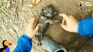 Man Gives Drowning Puppy CPR | The Dodo