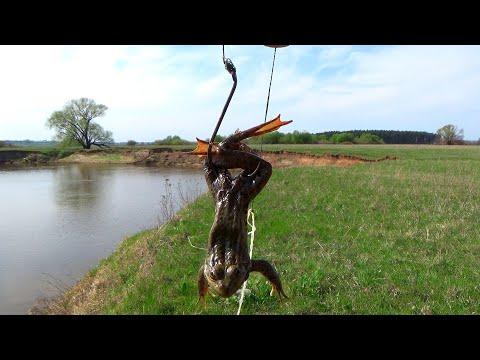 Ловля лягушек для наживки на сома, расстановка донок