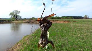Ловля лягушек для наживки на сома расстановка донок