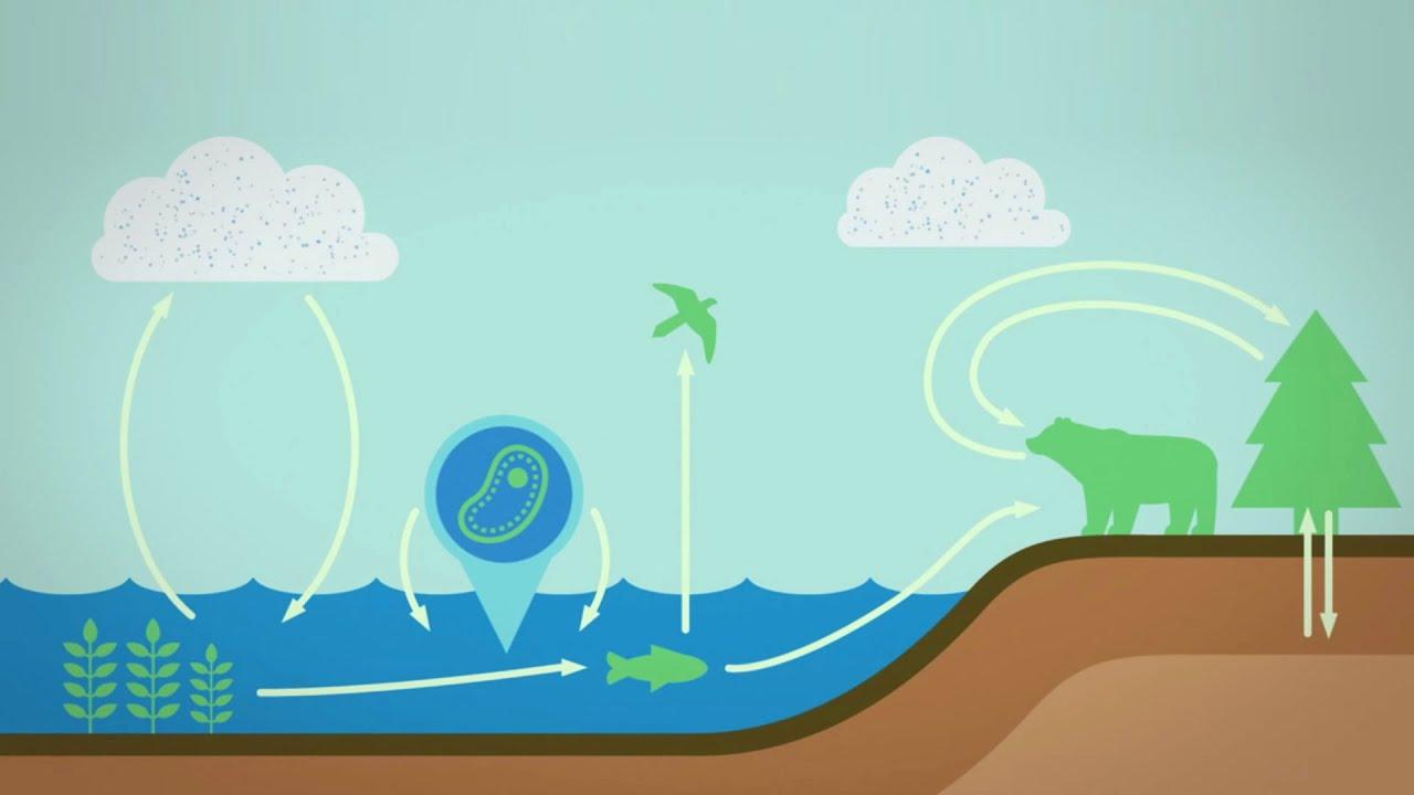 Una guía de la energía de la Tierra - Joshua Sneideman
