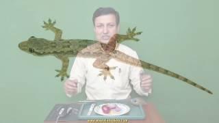 छिपकली को नानी याद दिला देगा यह नुस्खा Home remedies to get rid of lizards.
