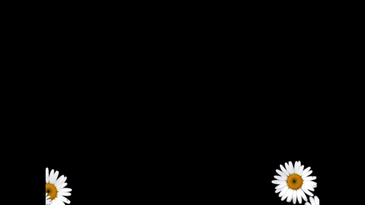 Футаж в формате avi скачать бесплатно