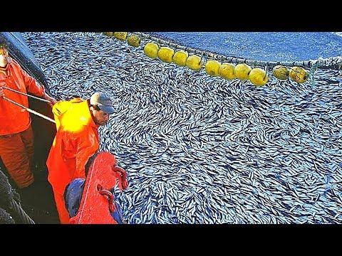 Самое Продвинутое Рыболовное (Судно)1000 тонн Улова,Чистая Рыбалка в Море