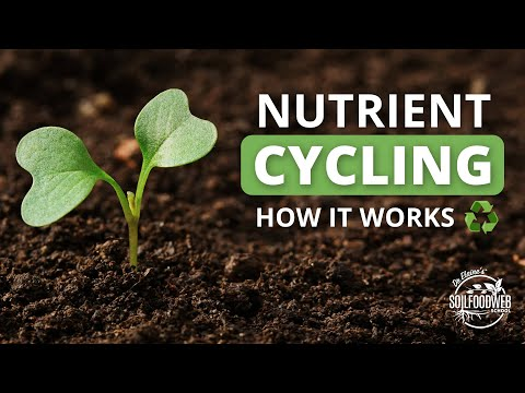 Nutrient Cycling | Soil Food Web School