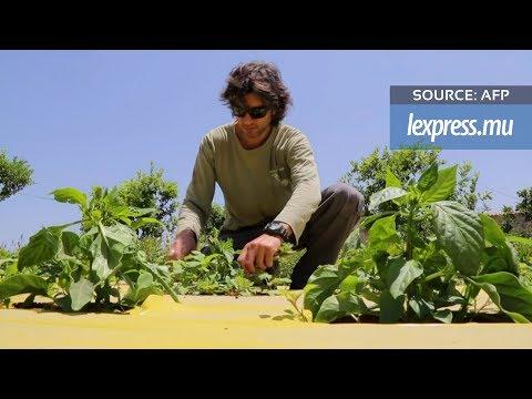 Israël: de la high-tech aux légumes bio au pays des startups