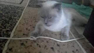 Кошка после стерилизации отходит от наркоза.