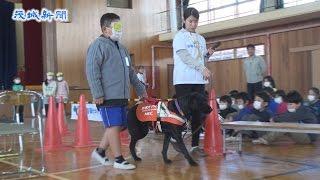 盲導犬と歩行体験 行方・麻生小 視覚障害者を理解
