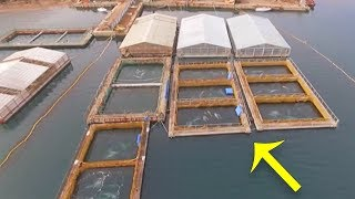 Shocking Drone Images Have Exposed Secret Ocean Prisons, With Over 100 Creatures Trapped Inside