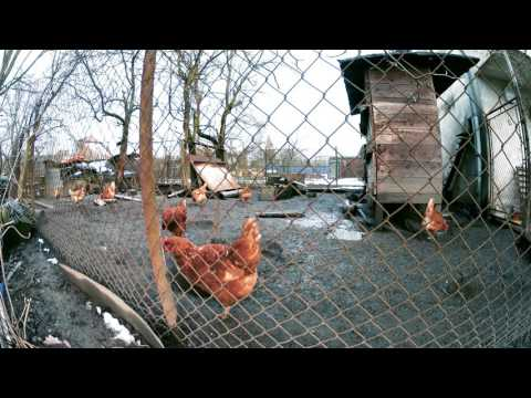 1 hour | Chicken farm in Ostrava-Dubina, Czech Republic