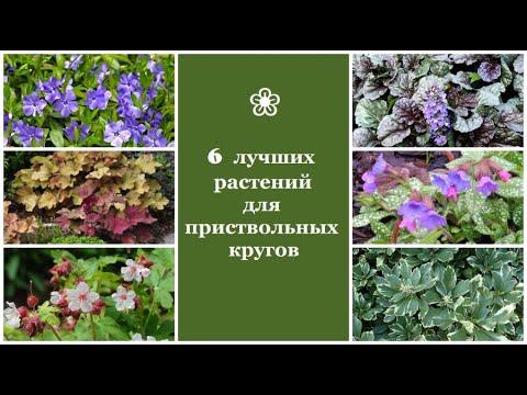 ❀ 6 лучших растений для приствольных кругов