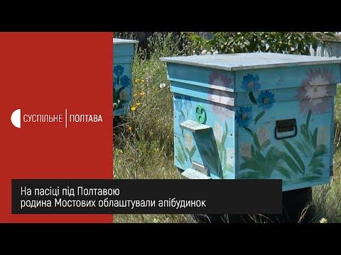 Суспільне Полтава: На пасіці під Полтавою родина Мостових облаштували апібудинок