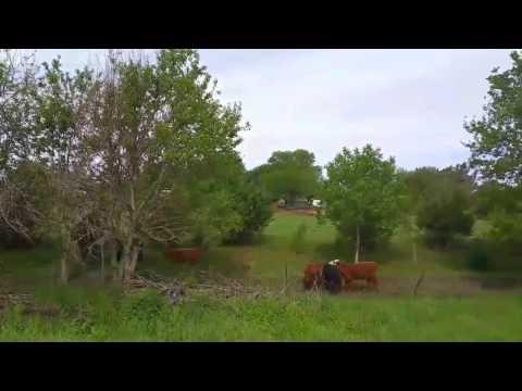 Cows, Nebraska history, and security lights - Full time van life