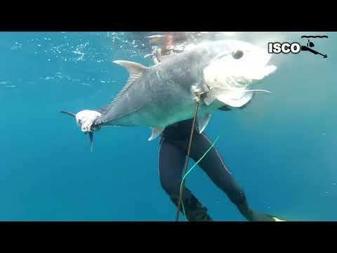 Spearfishing giant trevally fish SABANG (Kayu Mati Seuke Sabang Aceh)