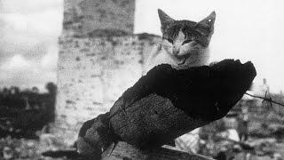 """Коты.  Кошки и коты - """"Мы тоже служили  Родине"""".Блокада Ленинграда."""