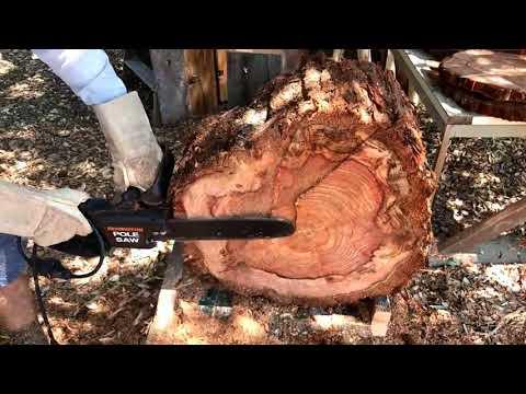 Natural Log Slice Redwood Wall Art Sculpture