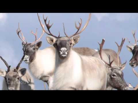 Native American Regions: The Arctic