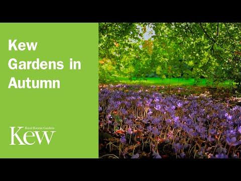 Kew Gardens in Autumn