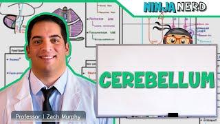 Neurology | Anatomy \u0026 Function of the Cerebellum