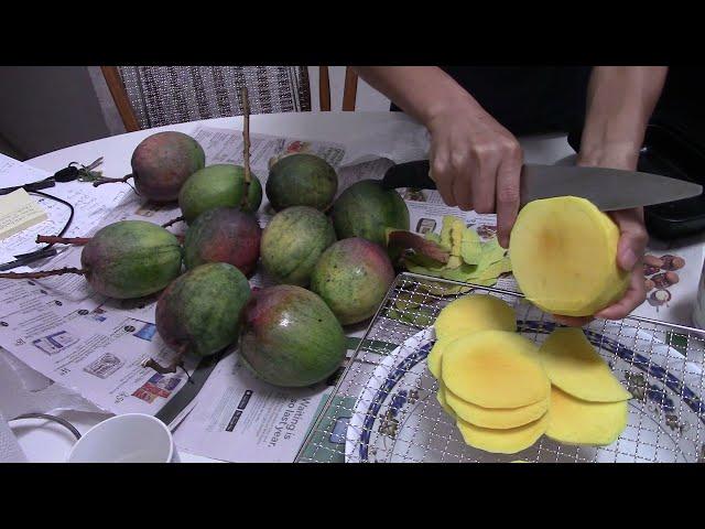 Mango - remove skins, slice, dehydrate, dried mangoes, just pick tree-ripe fresh mango by AllchitHow