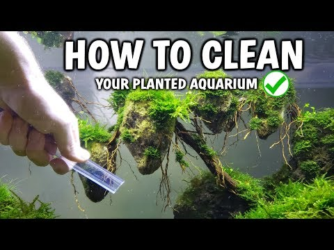 NO MORE ALGAE! How To Clean Your Aquarium Of Algae