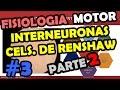 Fisiologia Sistema Motor y Reflejos - Interneuronas , Celulas de renshaw - Huso Muscular