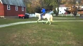 Advanced Horsemanship-Bridleless riding