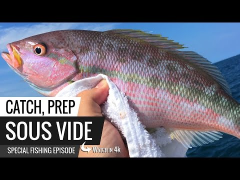 Sous Vide Yellow Tail Snapper - Catch, Prep and Sous Vide Special Fishing Trip Video