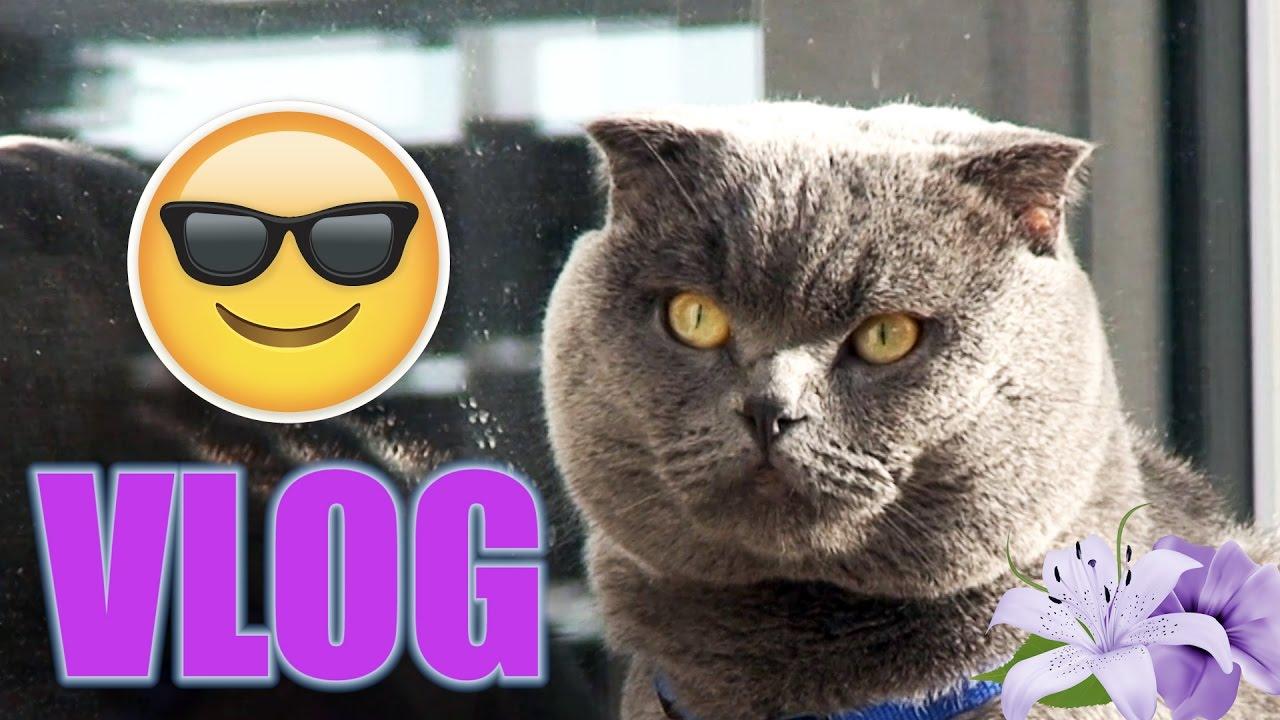Boss Cat VLOG Welcome Spring
