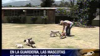 Una Guardería Para Perros En Quito