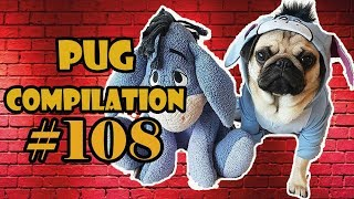 Pug Compilation 108  - Funny Dogs but only Pug Videos | Instapugs