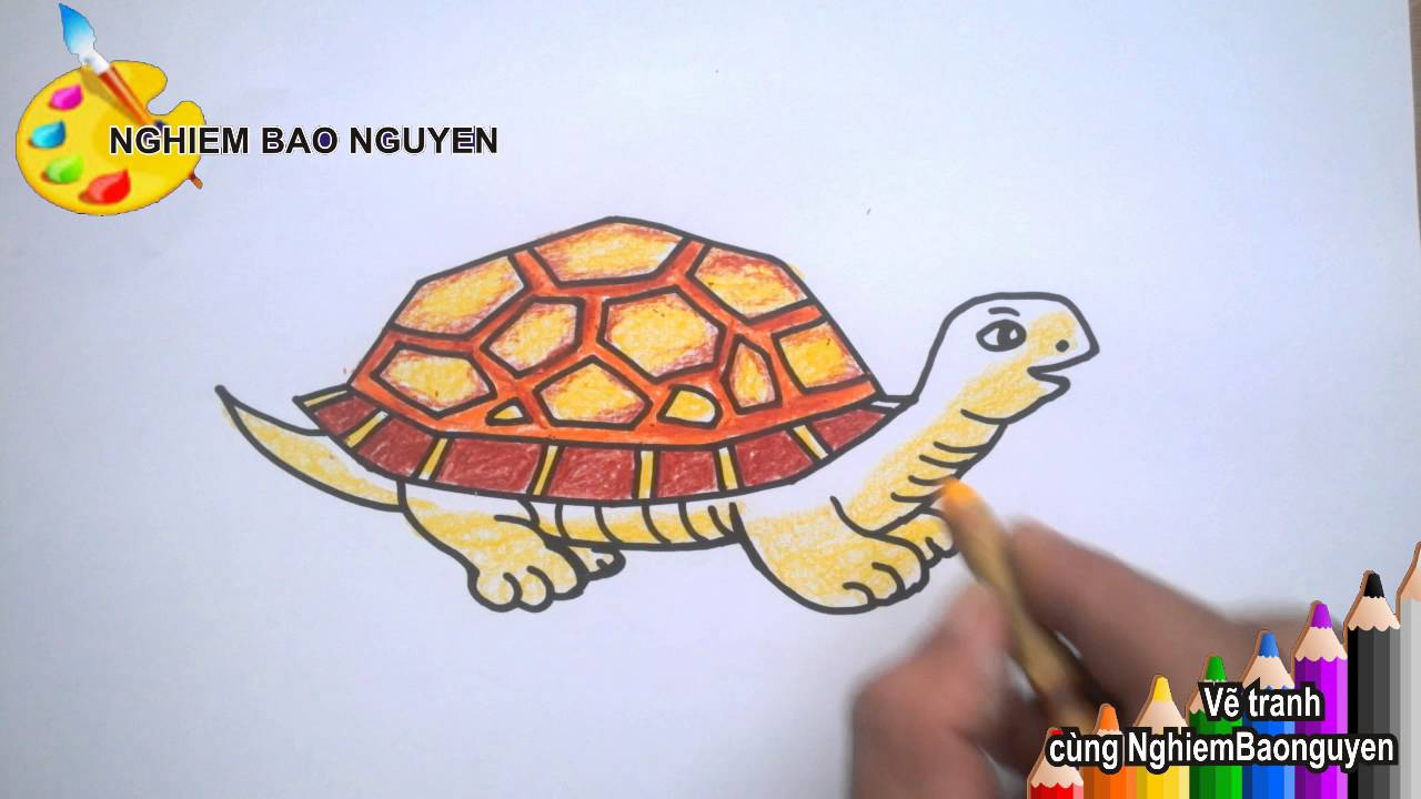 Vẽ con Rùa/How to Draw Turtle