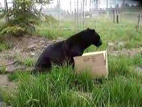 Catskill Cats: Enjoying their enrichment boxes