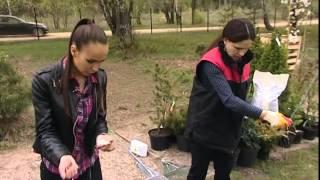Советы по уходу за газонами: питание, полив, удобрение, стрижка