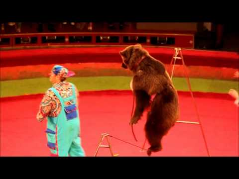 Bear at Circus- Astana Kazakhstan- June 5th 2011
