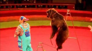 Bear at Circus Astana Kazakhstan June 5th 2011